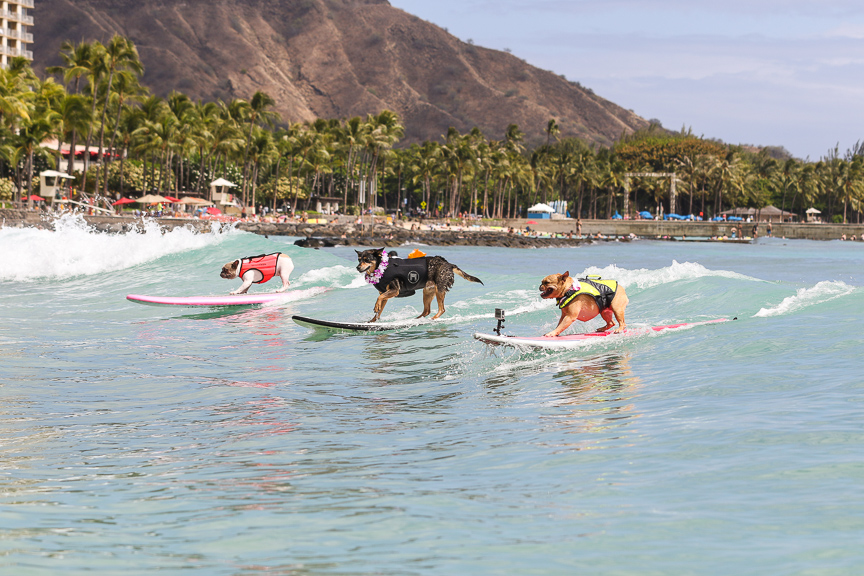 SURFDOGSHAWAII